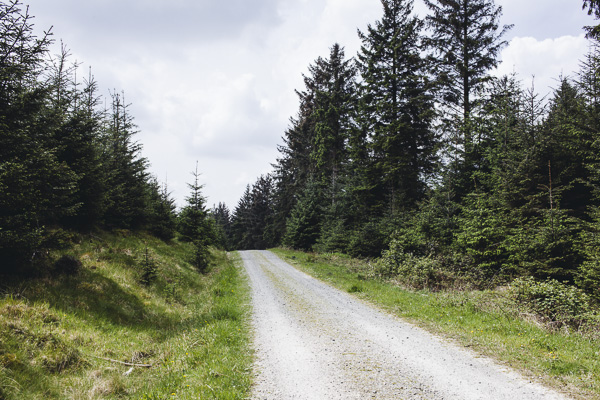 001_RC_Grizedale_Forest