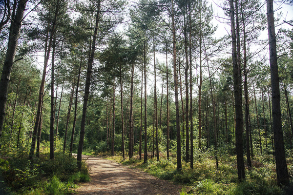 023_RadiatingChaos_Delamere_Forest