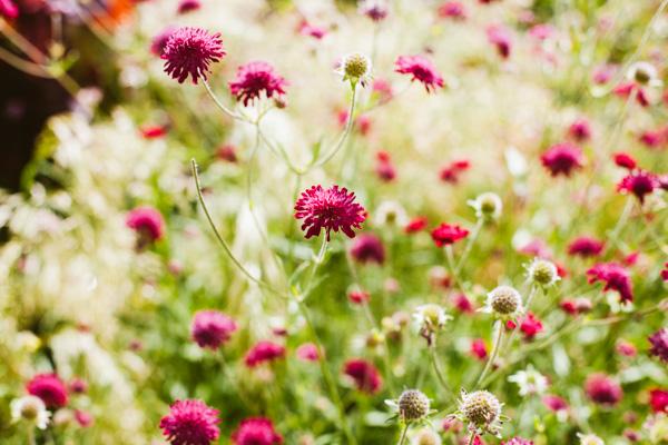 Radiating_Chaos_Bodnant_Garden_015