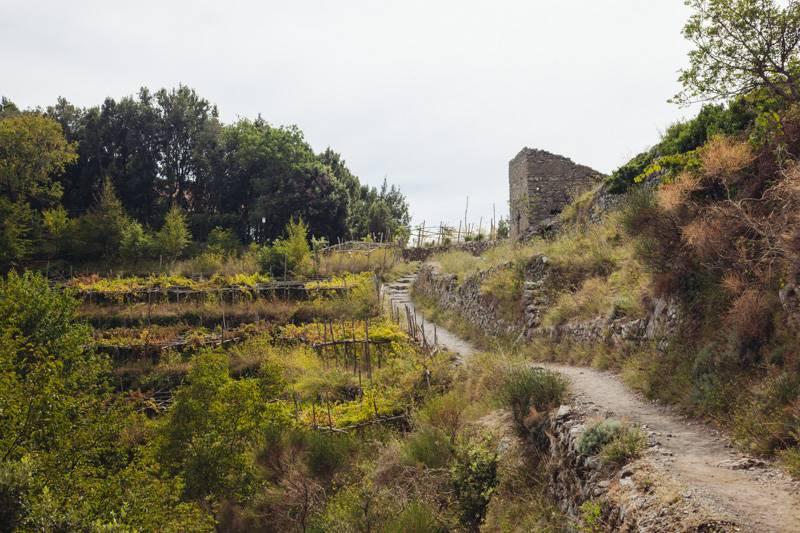 Narrow dirt track leading through groves, Sentiero degli Dei