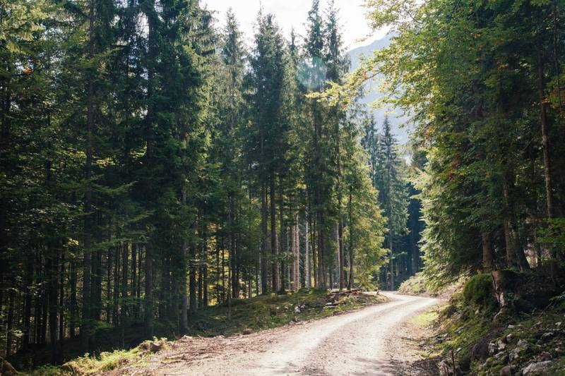 Forest and bridleway in Postalm, Austria