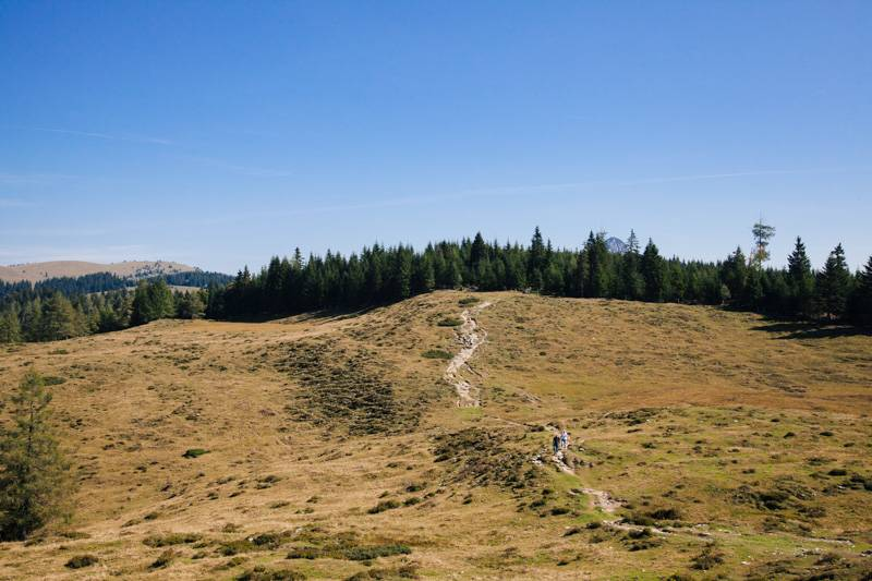 A walking track across a hillside, leading to forest in Postalm, Austria