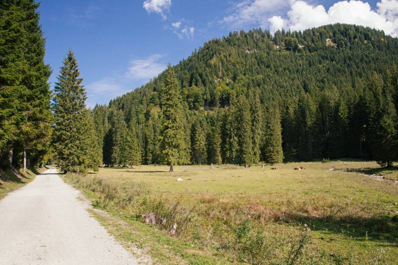 A pathway next to a forest in Postalm, Austria