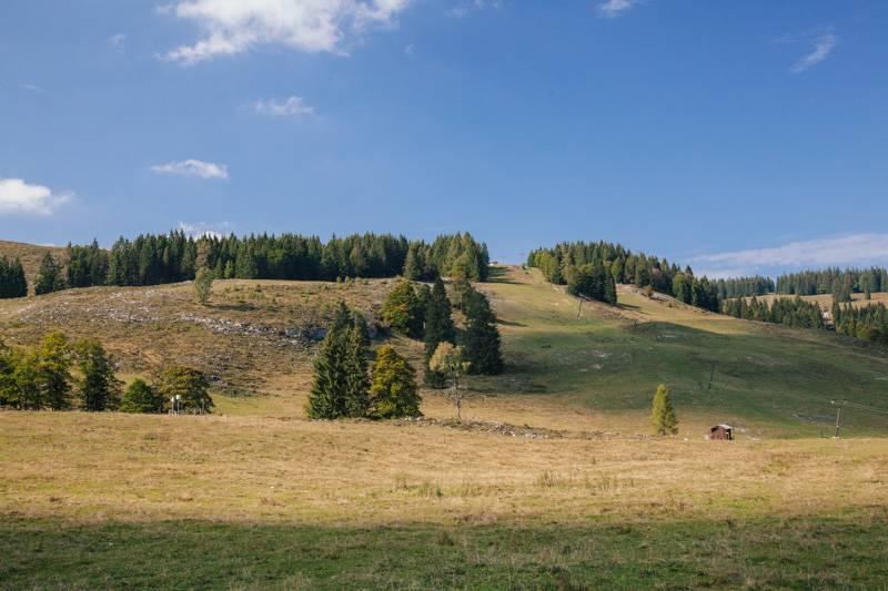 Trees and blue sky in Postalm, Austria