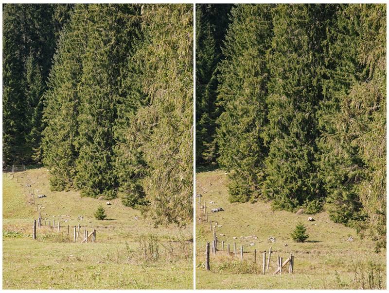Trees in Postalm, Austria