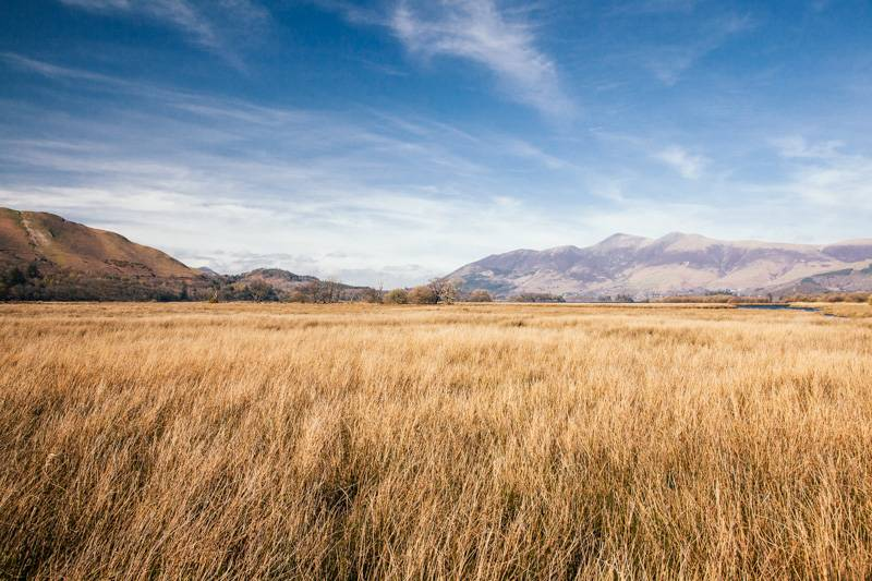 Autumn scene with long grass, blue sky with clouds and fells in the background