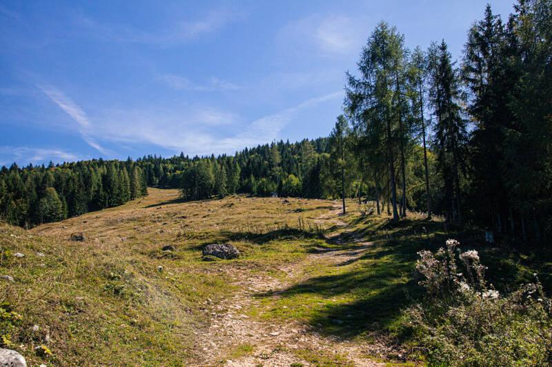 Tall trees and mountain view, Rotwandl, Austria